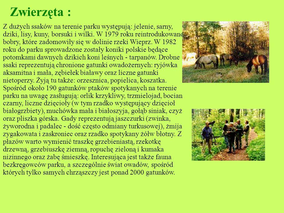 Roślinność: Flora naczyniowa Parku liczy około 750 gatunków, w tym liczne górskie (m.in. tojad dzióbaty, widłak wroniec, czosnek siatkowaty), północne