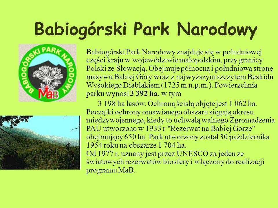 Zwierzęta : Z dużych ssaków na terenie parku występują: jelenie, sarny, dziki, lisy, kuny, borsuki i wilki. W 1979 roku reintrodukowano bobry, które z