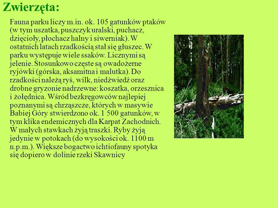 Roślinność : Obecnie na terenie parku potwierdzono występowanie około 500 gatunków roślin naczyniowych, prawie 200 gat. mchów oraz liczne porosty, glo