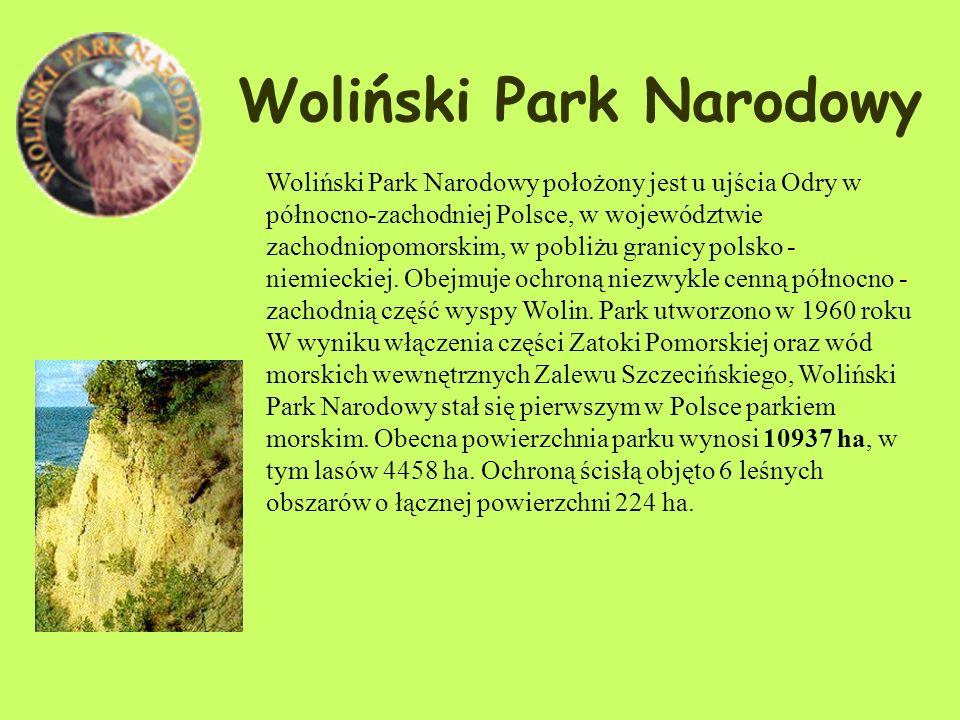 Zwierzęta: Fauna parku liczy m.in. ok. 105 gatunków ptaków (w tym uszatka, puszczyk uralski, puchacz, dzięcioły, płochacz halny i siwerniak). W ostatn