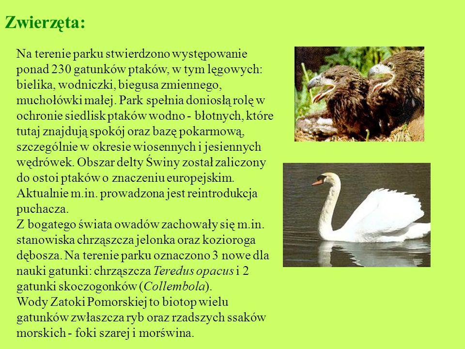 Roślinność: Na wyspie Wolin stwierdzono występowanie ponad 1300 gatunków roślin naczyniowych, w tym wielu gatunków chronionych i rzadkich. Wśród nich