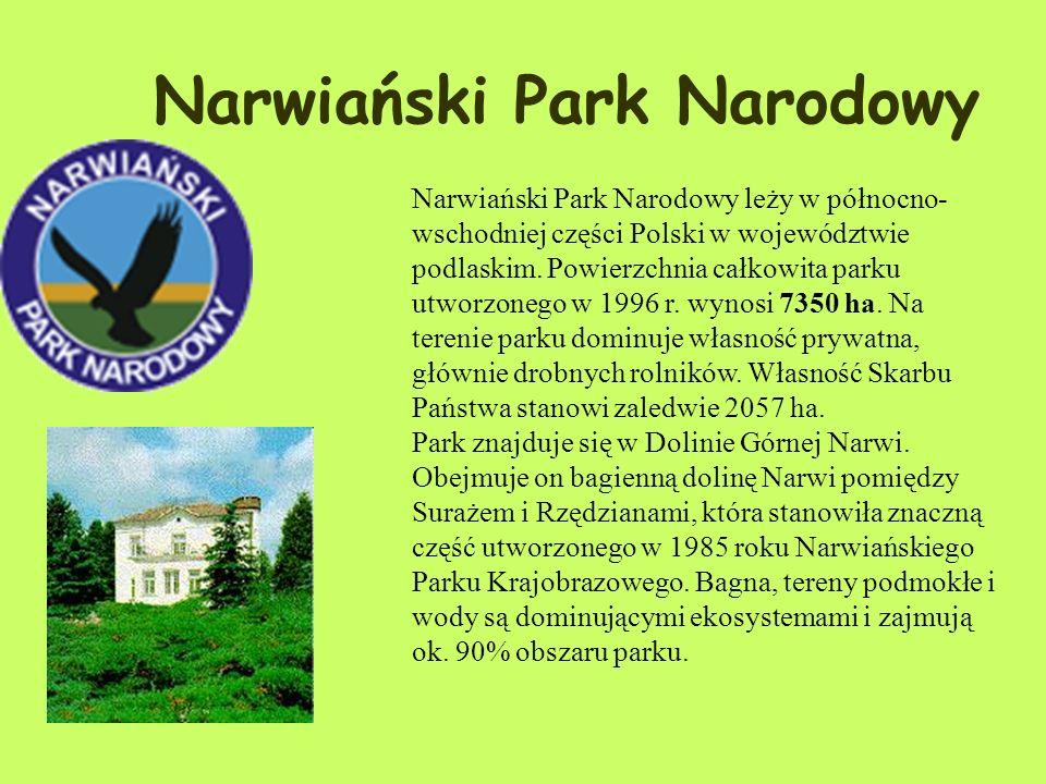 Zwierzęta: Na terenie parku stwierdzono występowanie ponad 230 gatunków ptaków, w tym lęgowych: bielika, wodniczki, biegusa zmiennego, muchołówki małe