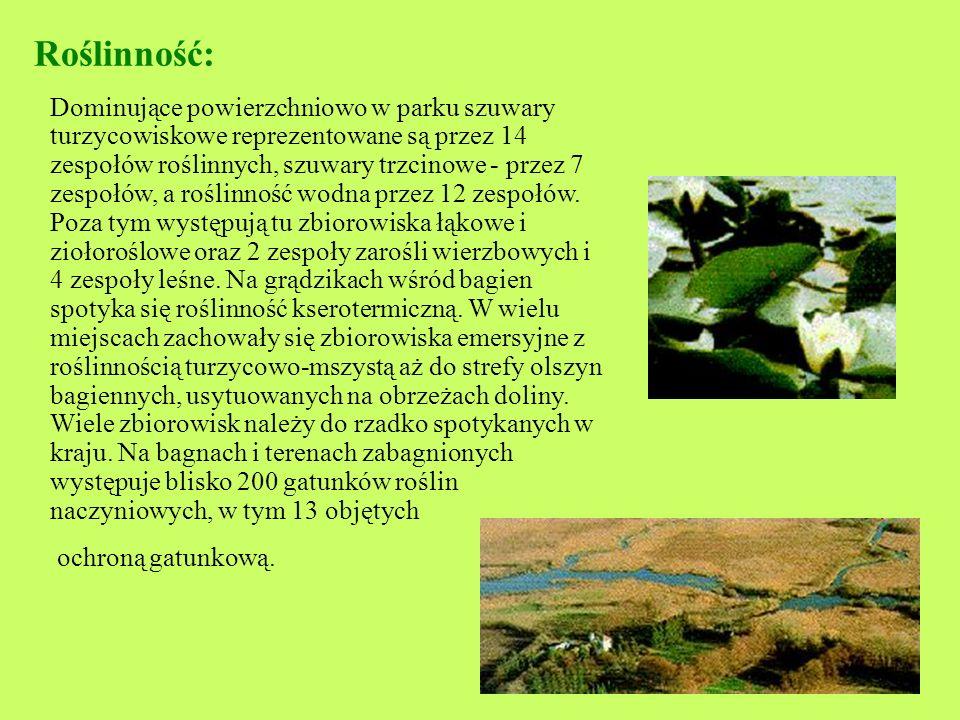 Narwiański Park Narodowy Narwiański Park Narodowy leży w północno- wschodniej części Polski w województwie podlaskim. Powierzchnia całkowita parku utw