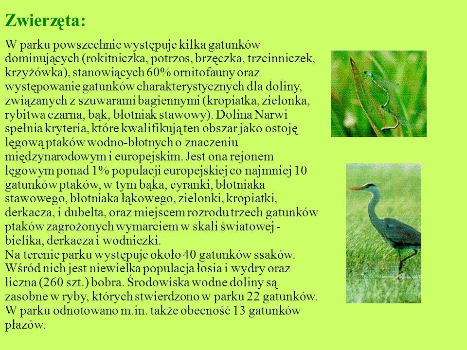 Roślinność: Dominujące powierzchniowo w parku szuwary turzycowiskowe reprezentowane są przez 14 zespołów roślinnych, szuwary trzcinowe - przez 7 zespo