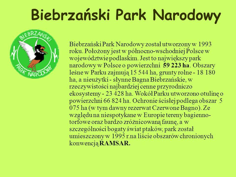 Zwierzęta: W parku powszechnie występuje kilka gatunków dominujących (rokitniczka, potrzos, brzęczka, trzcinniczek, krzyżówka), stanowiących 60% ornit