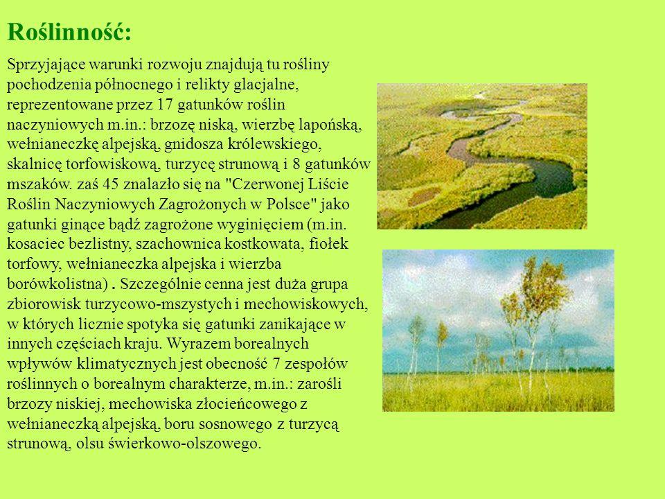 Biebrzański Park Narodowy Biebrzański Park Narodowy został utworzony w 1993 roku. Położony jest w północno-wschodniej Polsce w województwie podlaskim.