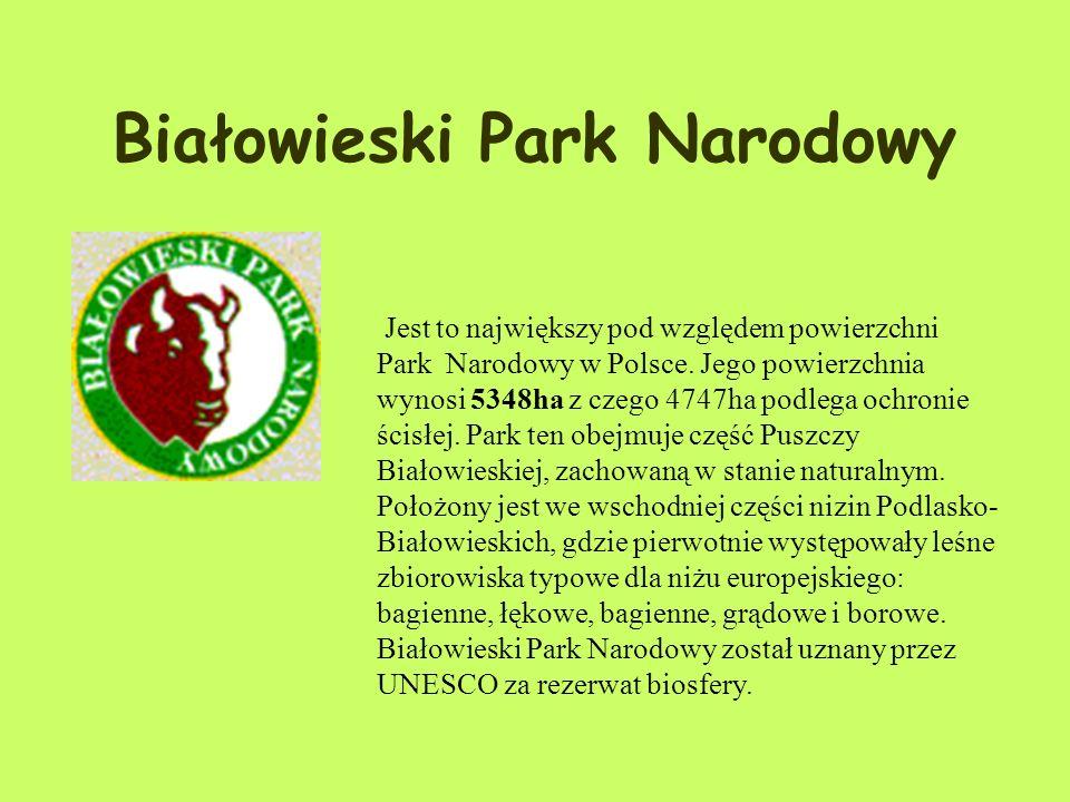 Białowieski Park Narodowy Jest to największy pod względem powierzchni Park Narodowy w Polsce.