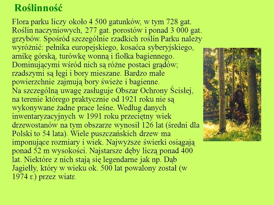 Zwierzęta : Z dużych ssaków na terenie parku występują: jelenie, sarny, dziki, lisy, kuny, borsuki i wilki.