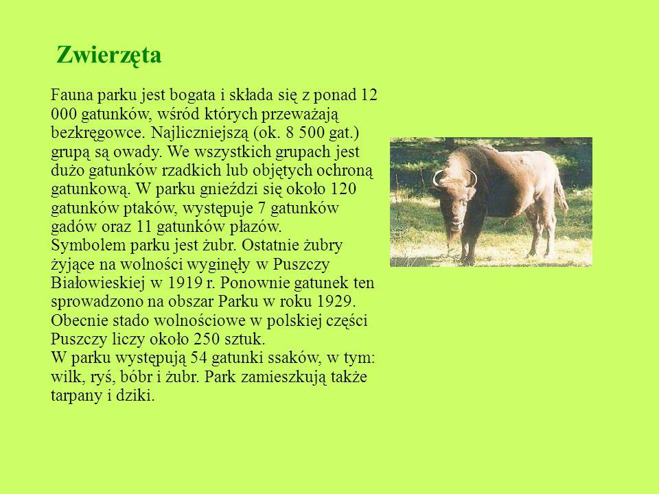 Zwierzęta Fauna parku jest bogata i składa się z ponad 12 000 gatunków, wśród których przeważają bezkręgowce.