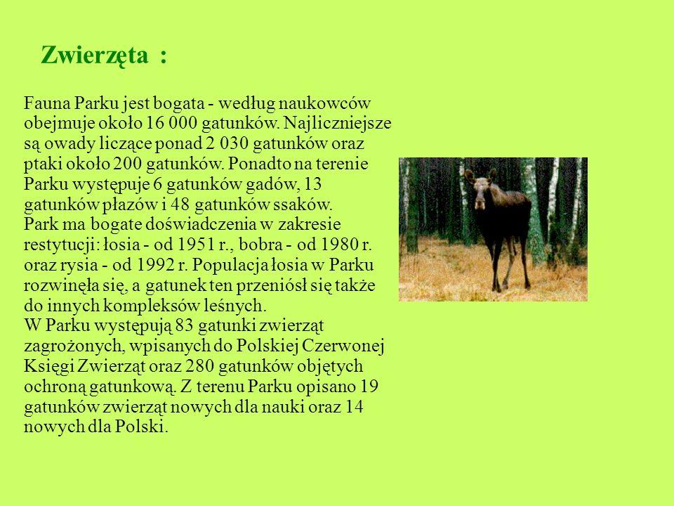 Zwierzęta : Fauna Parku jest bogata - według naukowców obejmuje około 16 000 gatunków.