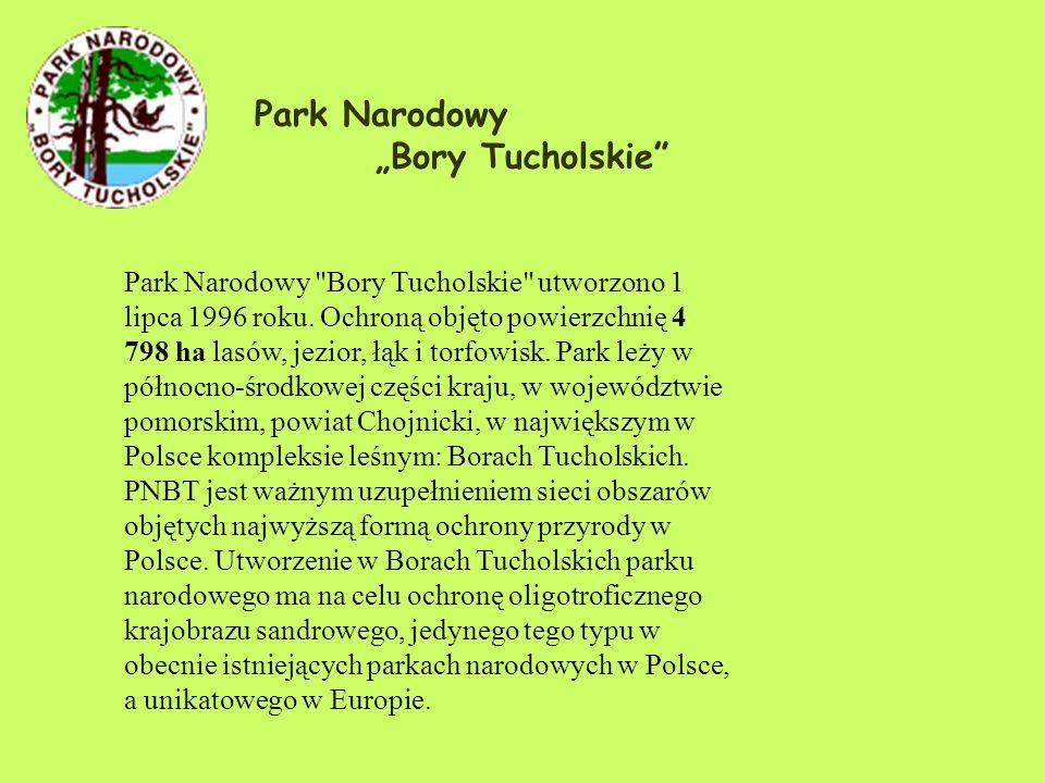 Park Narodowy Bory Tucholskie Park Narodowy Bory Tucholskie utworzono 1 lipca 1996 roku.