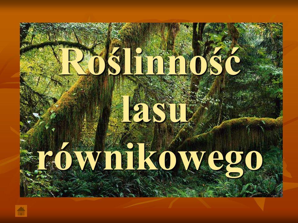 Roślinność lasu równikowego