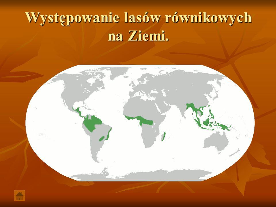 Występowanie lasów równikowych na Ziemi.