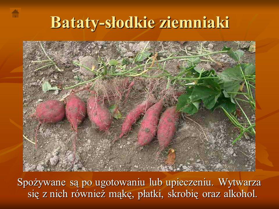 Bataty-słodkie ziemniaki Spożywane są po ugotowaniu lub upieczeniu. Wytwarza się z nich również mąkę, płatki, skrobię oraz alkohol.