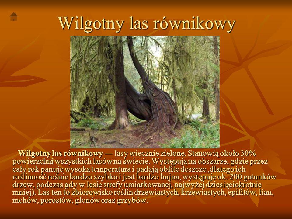 Wilgotny las równikowy Wilgotny las równikowy lasy wiecznie zielone. Stanowią około 30% powierzchni wszystkich lasów na świecie. Występują na obszarze