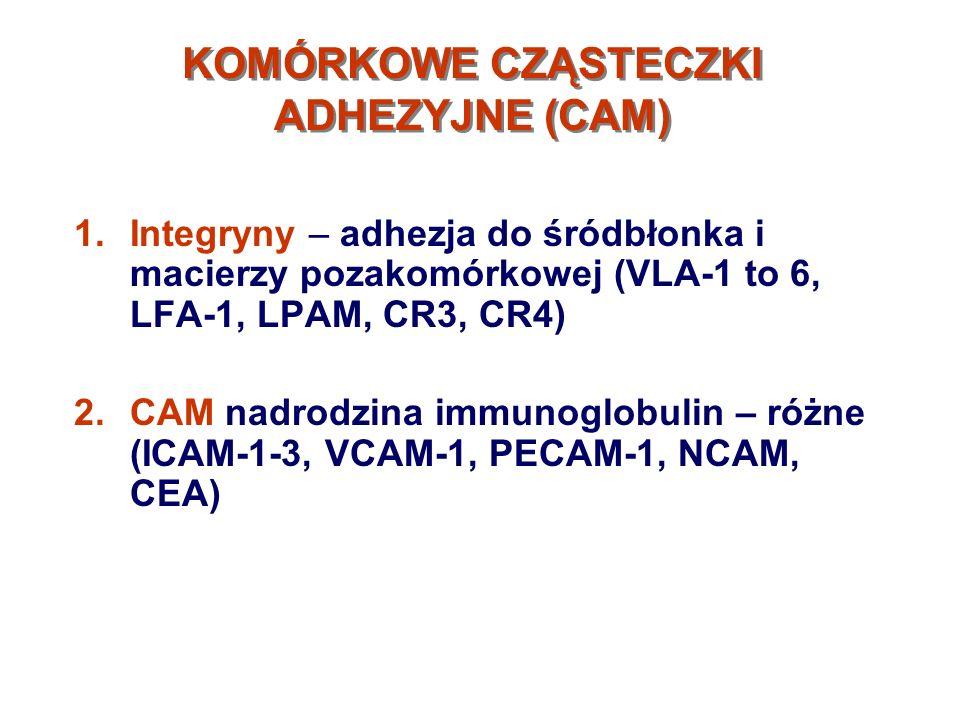 KOMÓRKOWE CZĄSTECZKI ADHEZYJNE (CAM)-2 1.Selektyny – cząsteczki na leukocytach i śródbłonku które wiążą się z węglowodanami (selektyny E, P, L) 2.Kadheryny – wiążą się z kateninami, elementami cytoszkieletu na drodze wapniowo zależnej (kadheryny E,N,T) 3.CD44 i ich warianty – komórkowe receptory kw.hialuronowego zaangażowane w interakcjach komórka-komórka i komórka-macierz pozakom.