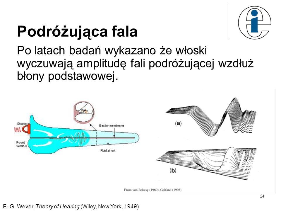 24 Podróżująca fala Po latach badań wykazano że włoski wyczuwają amplitudę fali podróżującej wzdłuż błony podstawowej. E. G. Wever, Theory of Hearing