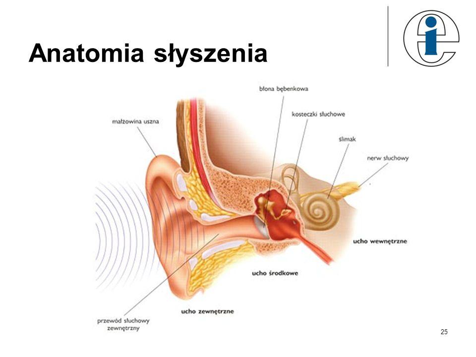 Anatomia słyszenia 25
