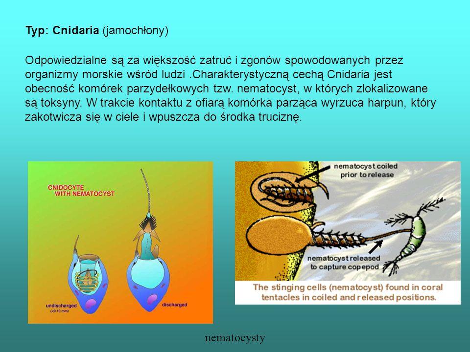 Typ: Cnidaria (jamochłony) Odpowiedzialne są za większość zatruć i zgonów spowodowanych przez organizmy morskie wśród ludzi.Charakterystyczną cechą Cn