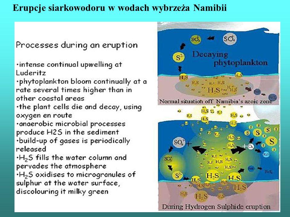 Erupcje siarkowodoru w wodach wybrzeża Namibii