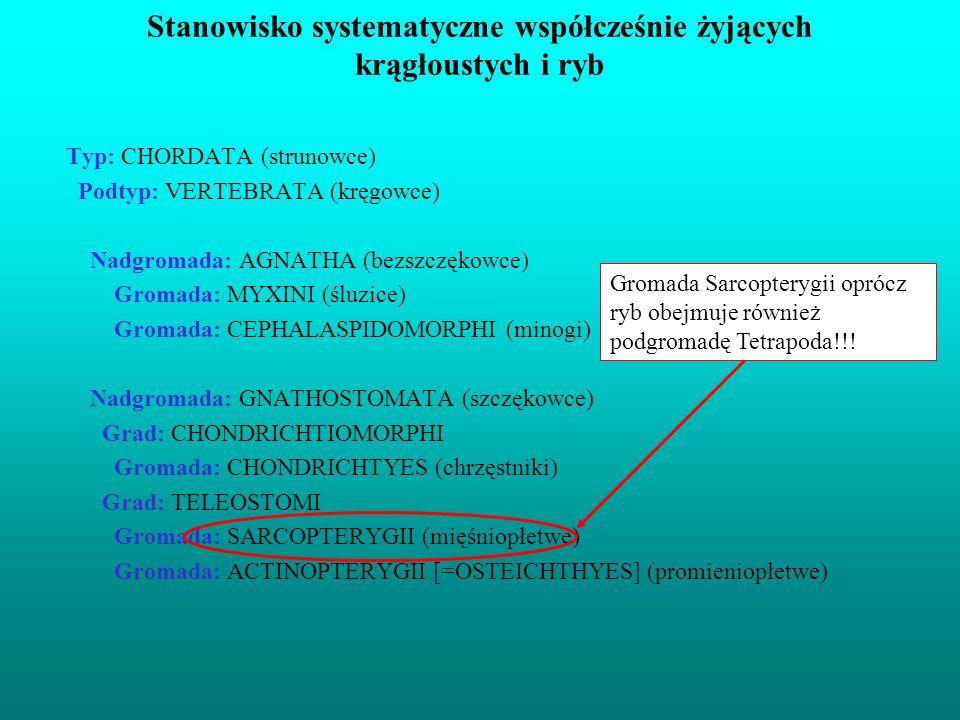 Stanowisko systematyczne współcześnie żyjących krągłoustych i ryb Typ: CHORDATA (strunowce) Podtyp: VERTEBRATA (kręgowce) Nadgromada: AGNATHA (bezszcz