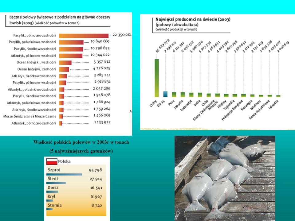 Wielkość polskich połowów w 2003r w tonach (5 najważniejszych gatunków)