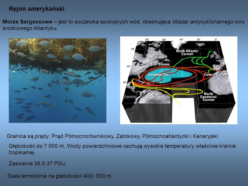 Rejon amerykański Morze Sargassowe – jest to soczewka spokojnych wód, obejmująca obszar antycyklonalnego wiru środkowego Atlantyku. Granica są prądy: