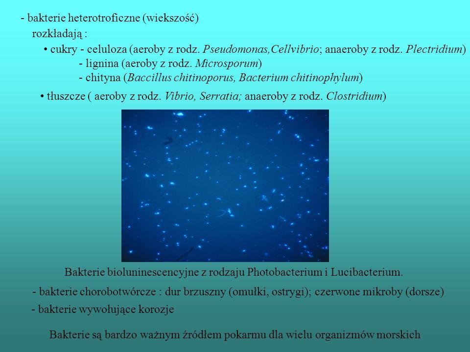 Bakterie warunkują obieg pierwiastków w oceanach - bakterie gnilne – rozkładają martwą materie (produkty : amoniak,dwutlenek węgla, woda) - bakterie n
