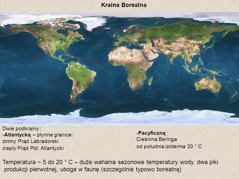 Kraina Borealna Temperatura ~ 5 do 20 ° C – duże wahania sezonowe temperatury wody, dwa piki produkcji pierwotnej, uboga w faunę (szczególnie typowo b