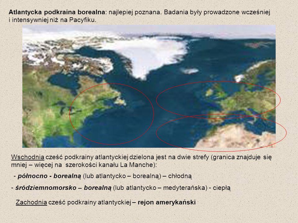 Atlantycka podkraina borealna: najlepiej poznana. Badania były prowadzone wcześniej i intensywniej niż na Pacyfiku. - północno - borealną (lub atlanty