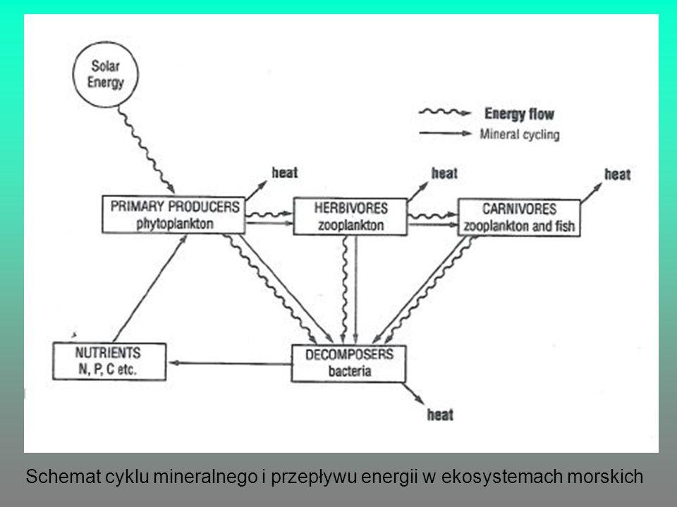 Schemat cyklu mineralnego i przepływu energii w ekosystemach morskich