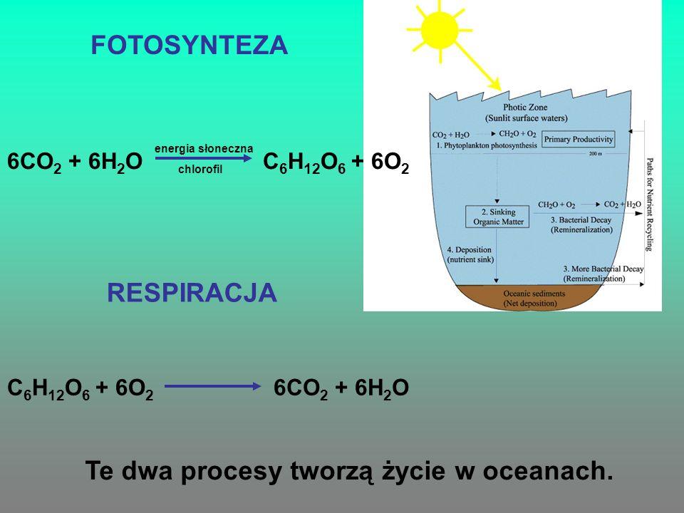 FOTOSYNTEZA 6CO 2 + 6H 2 O energia słoneczna chlorofil C 6 H 12 O 6 + 6O 2 RESPIRACJA C 6 H 12 O 6 + 6O 2 6CO 2 + 6H 2 O Te dwa procesy tworzą życie w