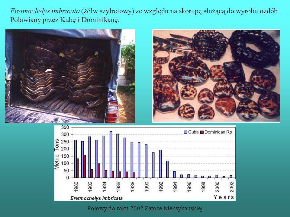 Eretmochelys imbricata (żółw szylretowy) ze względu na skorupę służącą do wyrobu ozdób. Poławiany przez Kubę i Dominikanę. Połowy do roku 2002 Zatoce