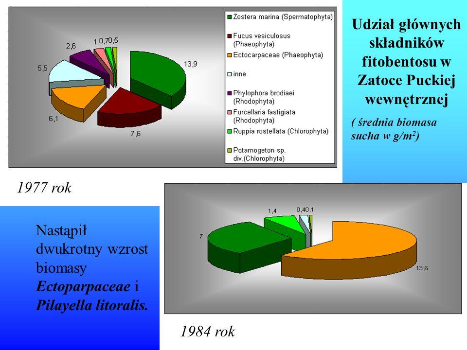 Ilościowe i jakościowe rozmieszczenie fauny dennej w centralnej części Głębi Gdańskiej