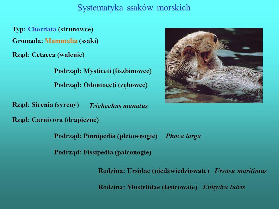 Wielkość ssaków morskich
