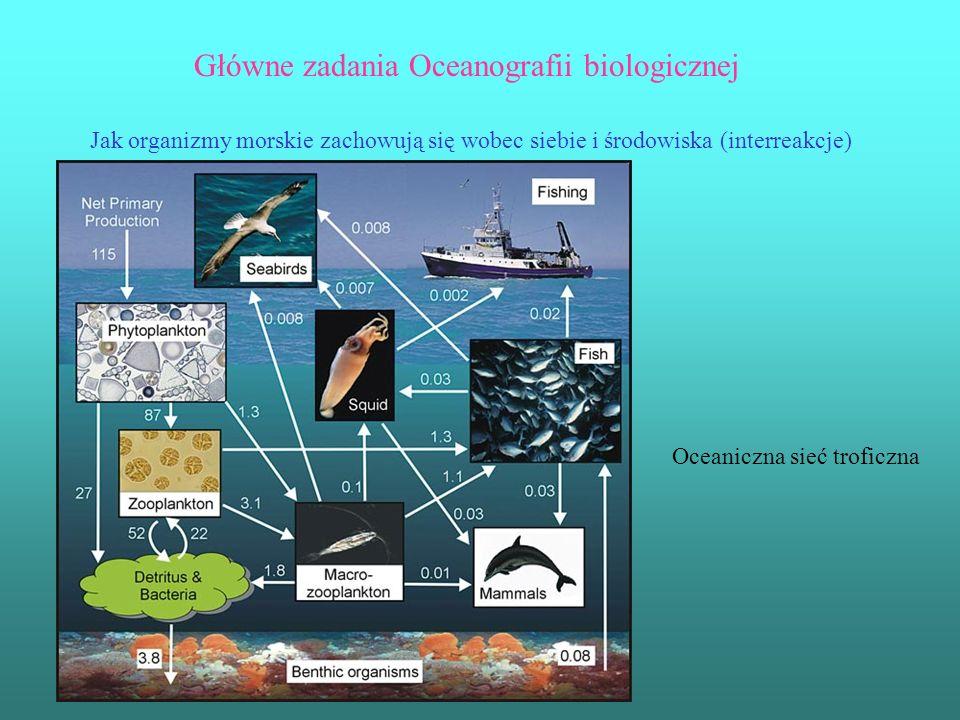 Główne zadania Oceanografii biologicznej Jak organizmy morskie zachowują się wobec siebie i środowiska (interreakcje) Oceaniczna sieć troficzna