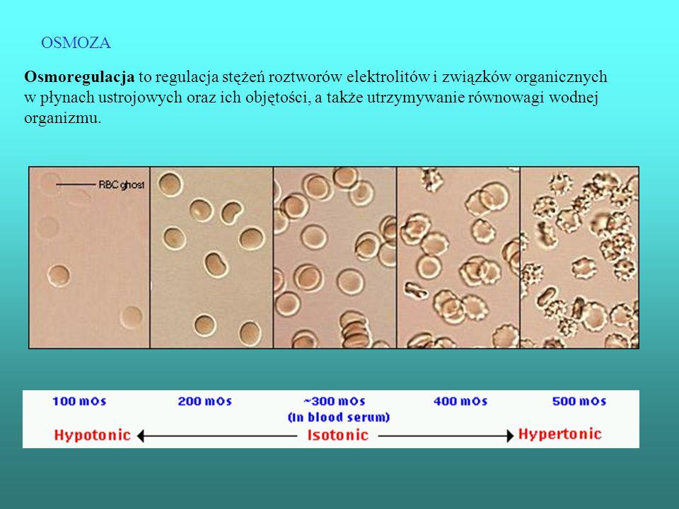 OSMOZA Osmoregulacja to regulacja stężeń roztworów elektrolitów i związków organicznych w płynach ustrojowych oraz ich objętości, a także utrzymywanie