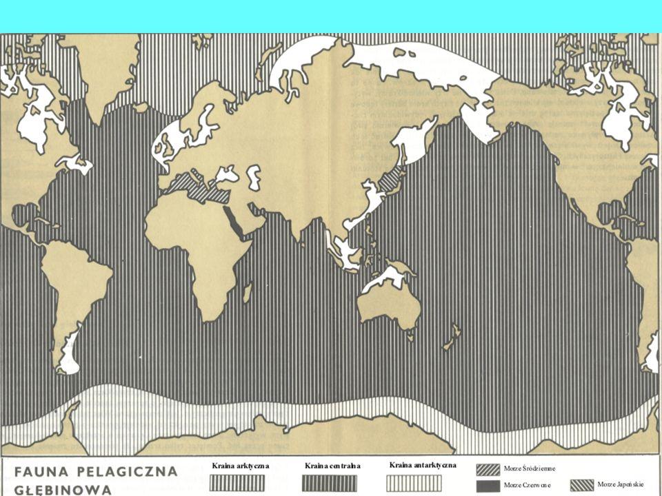 Narzędzia i techniki podstawowych badań biologicznych Plankton sieci do połowu małych i dużych zwierząt - Apstaina ø 50 cm dł.