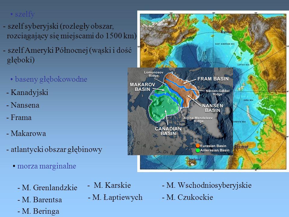 szelfy baseny głębokowodne morza marginalne - szelf syberyjski (rozległy obszar, rozciągający się miejscami do 1500 km) - szelf Ameryki Północnej (wąs