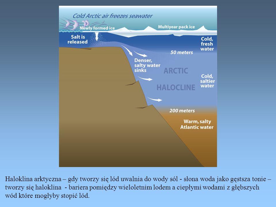 Haloklina arktyczna – gdy tworzy się lód uwalnia do wody sól - słona woda jako gęstsza tonie – tworzy się haloklina - bariera pomiędzy wieloletnim lod
