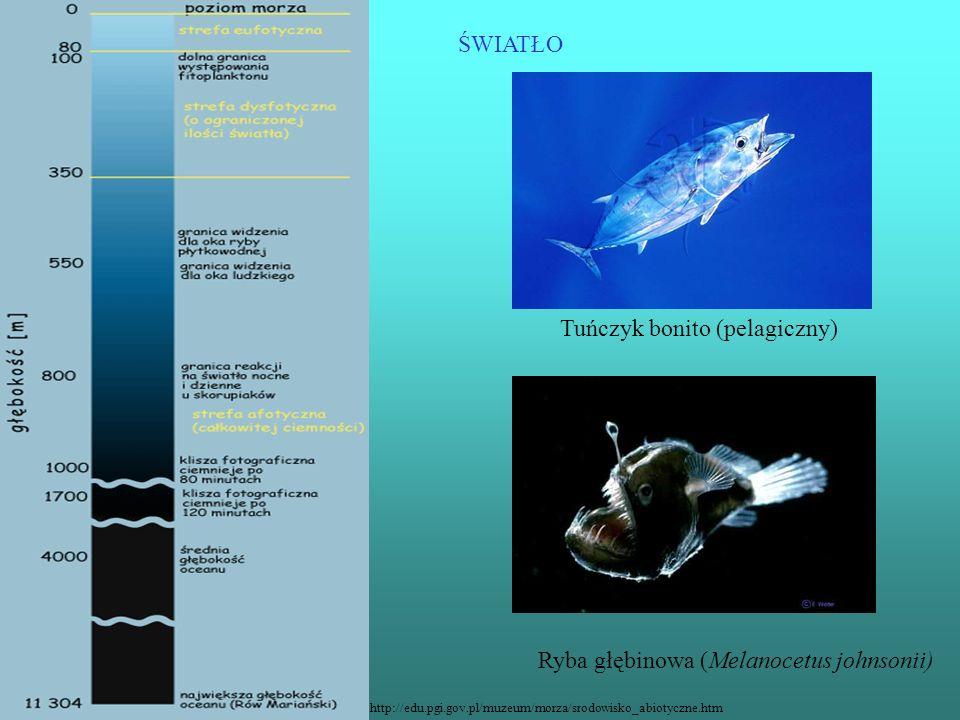 ŚWIATŁO http://edu.pgi.gov.pl/muzeum/morza/srodowisko_abiotyczne.htm Tuńczyk bonito (pelagiczny) Ryba głębinowa (Melanocetus johnsonii)
