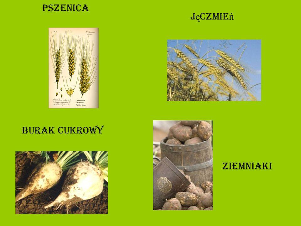 rolnictwo Rolnictwo wysokotowarowe.U ż ytki rolne zajmuj ą ok.
