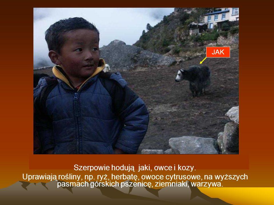Szerpowie hodują jaki, owce i kozy. Uprawiają rośliny, np. ryż, herbatę, owoce cytrusowe, na wyższych pasmach górskich pszenicę, ziemniaki, warzywa. J