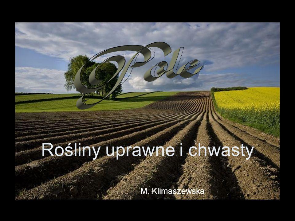 Rośliny uprawne i chwasty M. Klimaszewska