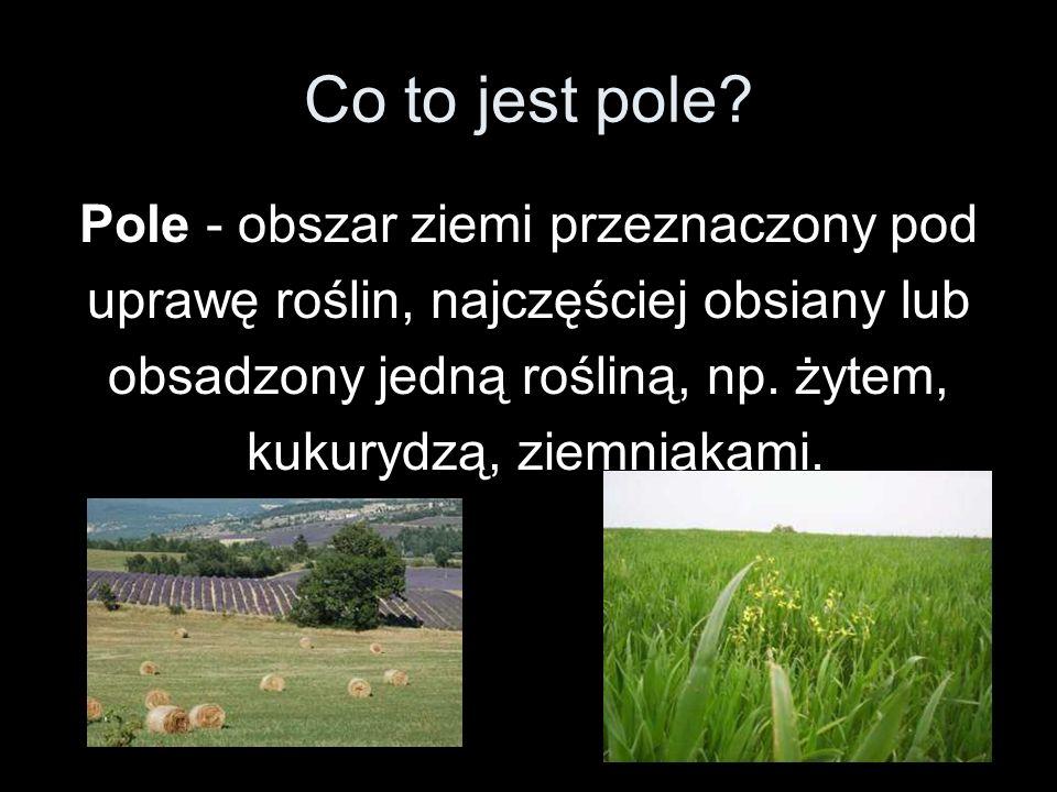 Co to jest pole? Pole - obszar ziemi przeznaczony pod uprawę roślin, najczęściej obsiany lub obsadzony jedną rośliną, np. żytem, kukurydzą, ziemniakam