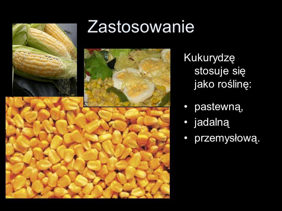 Zastosowanie Kukurydzę stosuje się jako roślinę: pastewną, jadalną przemysłową.