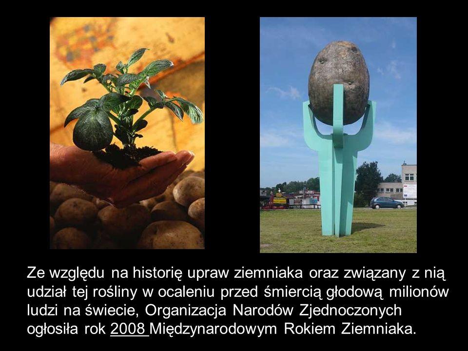 Ze względu na historię upraw ziemniaka oraz związany z nią udział tej rośliny w ocaleniu przed śmiercią głodową milionów ludzi na świecie, Organizacja
