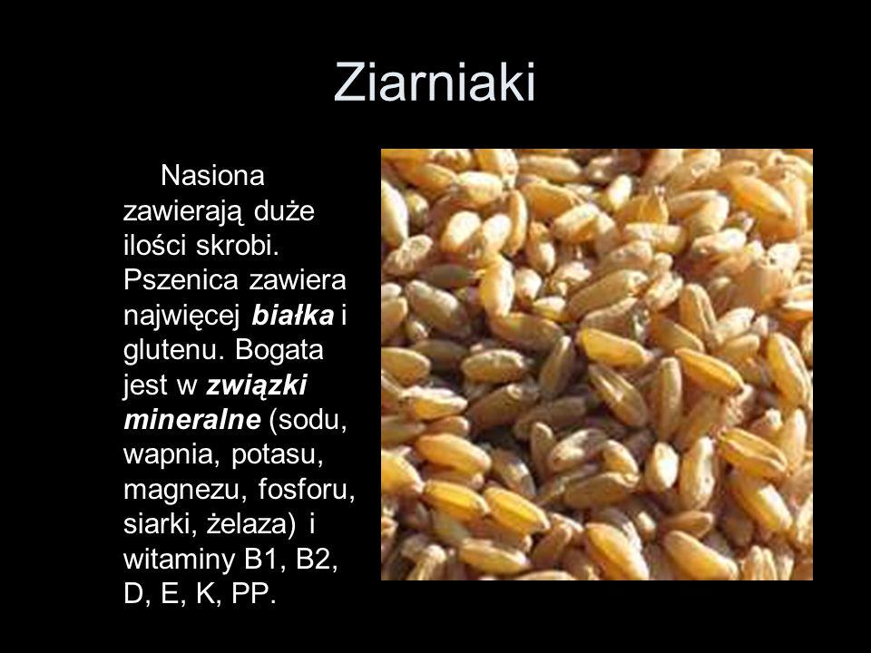 Ziarniaki Nasiona zawierają duże ilości skrobi. Pszenica zawiera najwięcej białka i glutenu. Bogata jest w związki mineralne (sodu, wapnia, potasu, ma