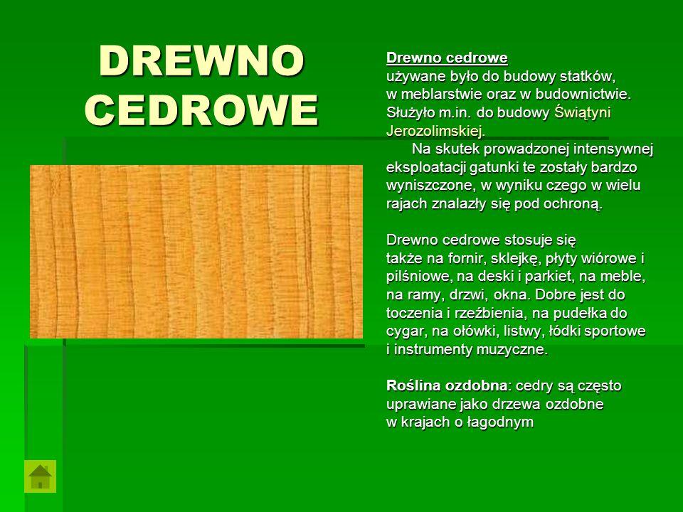 DREWNO CEDROWE Drewno cedrowe używane było do budowy statków, w meblarstwie oraz w budownictwie. Służyło m.in. do budowy Świątyni Jerozolimskiej. Na s