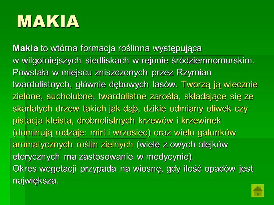 MAKIA Makia to wtórna formacja roślinna występująca w wilgotniejszych siedliskach w rejonie śródziemnomorskim. Powstała w miejscu zniszczonych przez R
